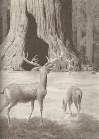 Conrad Buff illustration Big Tree and Deer