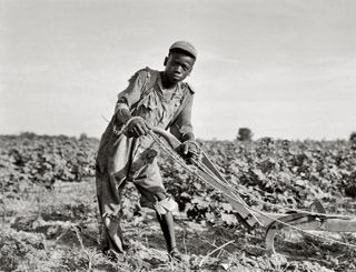 Dorothea Lange 13 year old sharecropper, Americus, GA