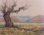 Grace Allison Griffith Spring Shower Valley of the Moon Thumbnail